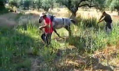 Με το άλογο στο χωράφι