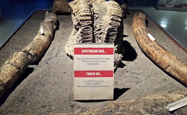 Museum, Sangiran, Purbakala, Fosil, UNESCO, Indonesia