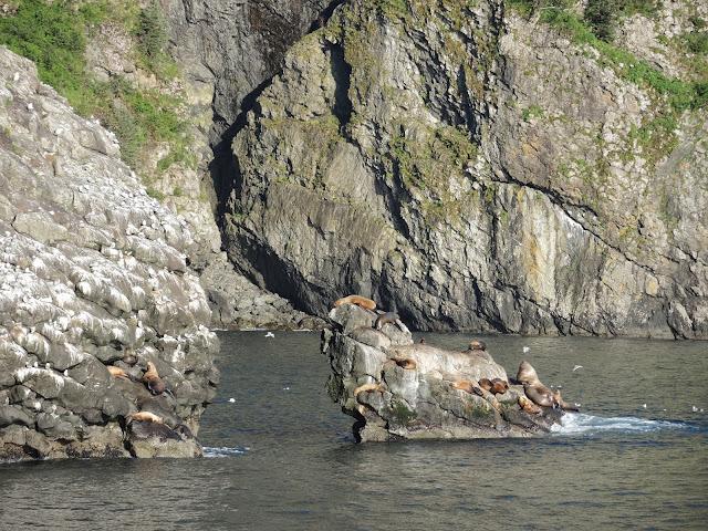 Kenai Fjords National Park 15