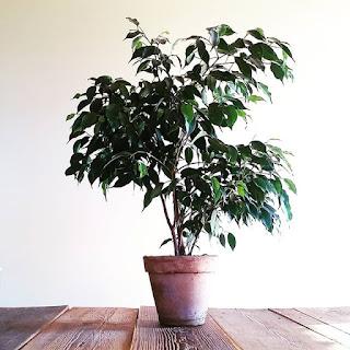 Błędy w uprawie roślin