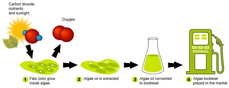 algae biofuel generation