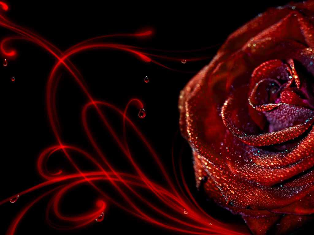 Wallpaper Proslut: Rose Wallpapers