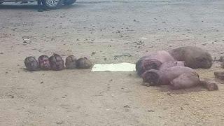 Identifican a los 5 desmembrados que habrían sido ejecutados por Cártel de Jalisco