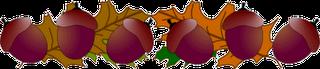 http://2.bp.blogspot.com/-Kgi6Am--kUU/UGv8Hf-WFoI/AAAAAAAAI6M/vrp6jcZARbQ/s1600/acorns+divider.png