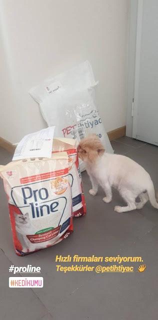 kedi kumu, petshop önerisi, proline ürünleri, topaklaşan kedi kumları