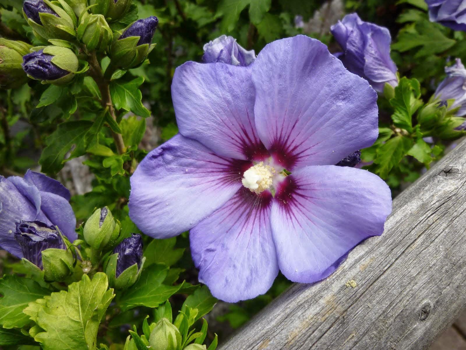 Purple Hibiscus Essay Help Btcourseworkybhgpaperfolderinfo