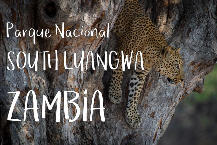 South Luangwa, Zambia