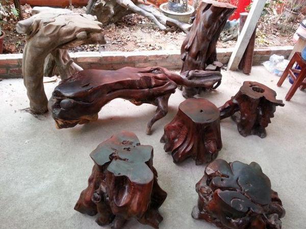 Bàn ghế gốc cây gỗ trắc có gì khác với bàn ghế phần thân cây?