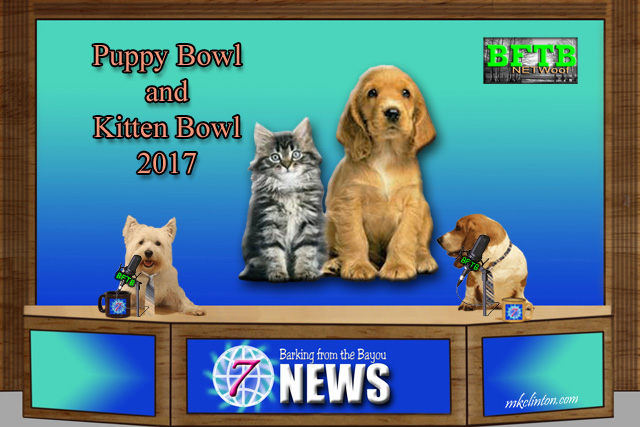 BFTB NETWoof News check out the Puppy and Kitten Bowls