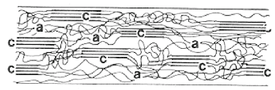 Crystalline and amorphous regions in molecular structure of fibre a = Amorphous, c = Crystalline (Citation Required)