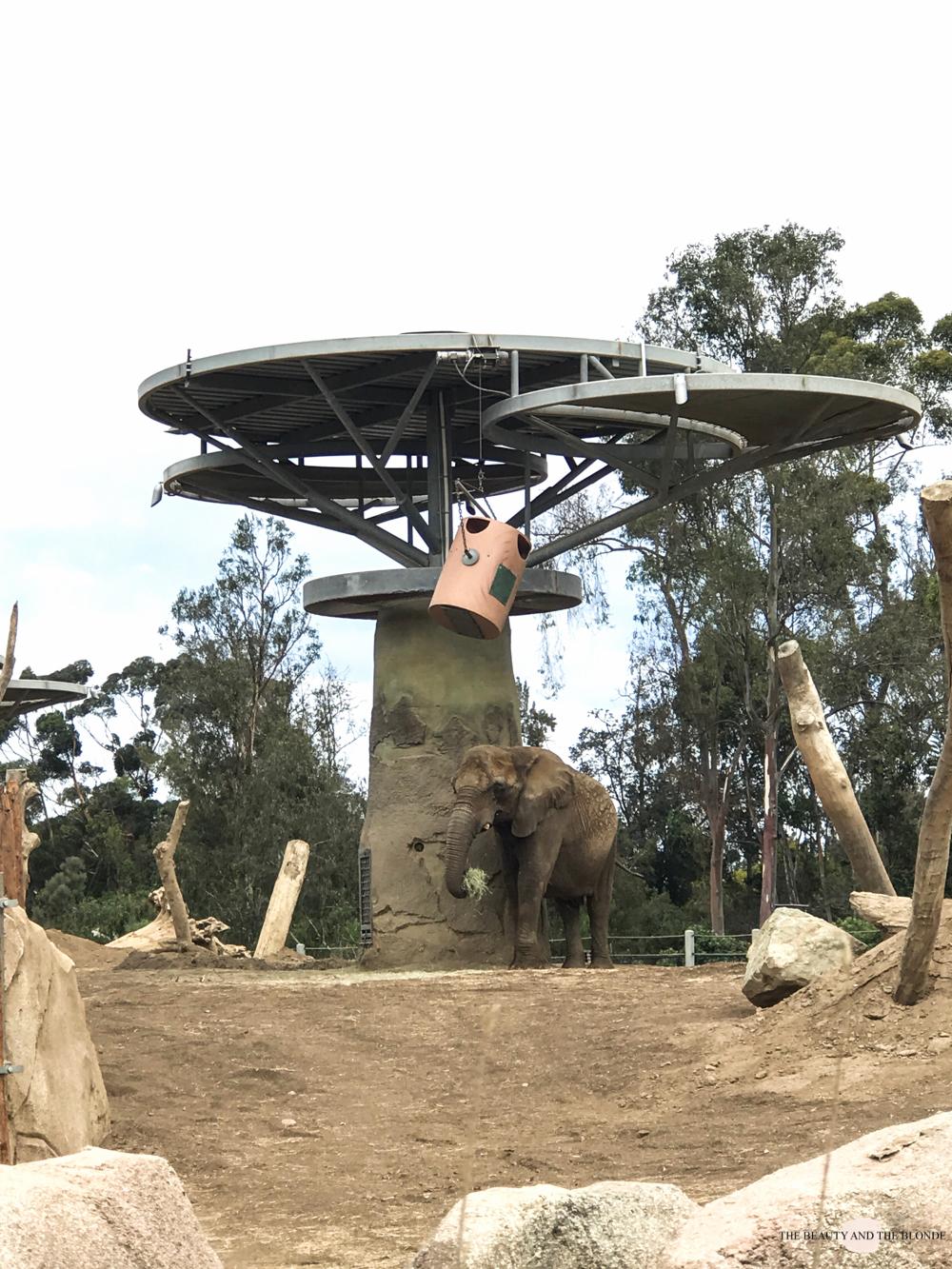 San Diego Zoo Elephant Elefant Westcoast USA Roadtrip Tipps