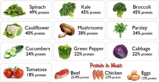 What Is Ideal Protein Diet Plan