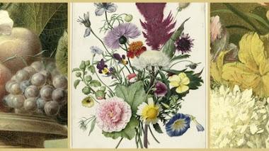Mi colección de flores en Rijksmuseum de Amsterdam
