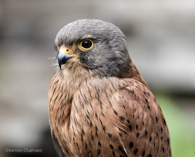 Portraits of Birds with Canon EOS 7D Mark II Cape Town