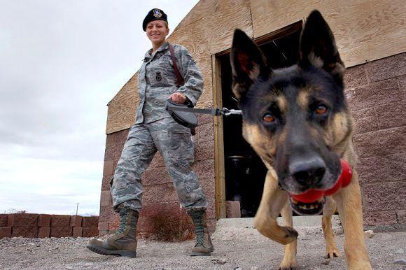Anjing pelacak tentara AS