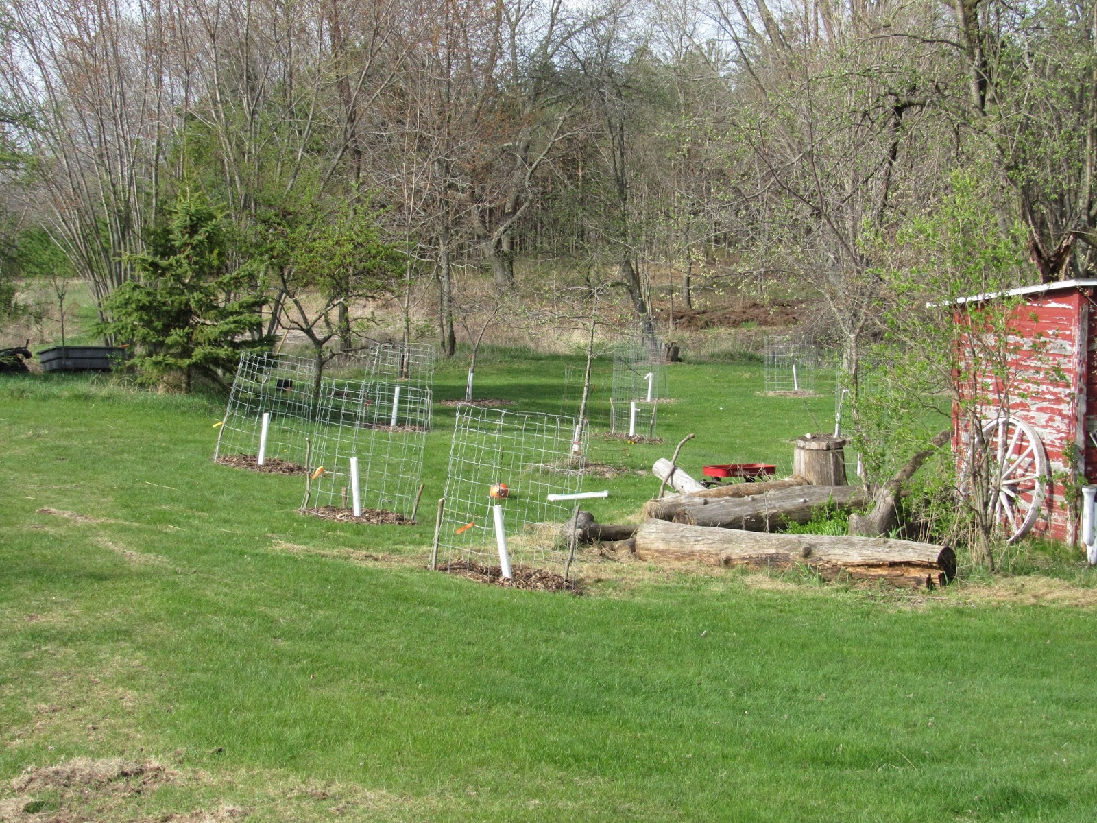planting bare root apple trees improved ecosystems