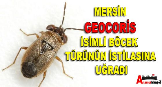 Mersin Büyük Şehir Belediyesi, Mersin Haber, Anamur Haber,