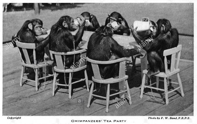猿類茶會的變化顯示出人類不願放棄自身的驕傲