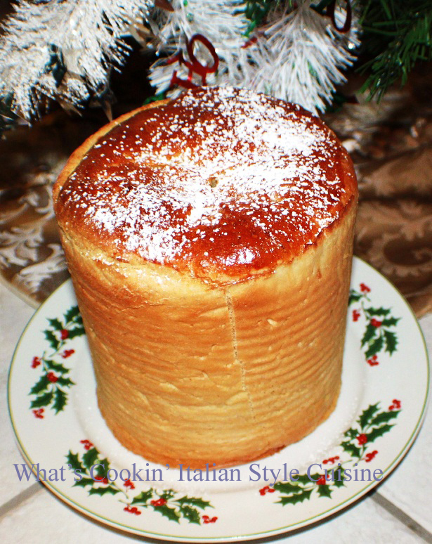 Pandoro is a golden cake made at christmas in Italy dusted with powdered sugar on a plate under the Christmas Tree with poinsettia on the plate