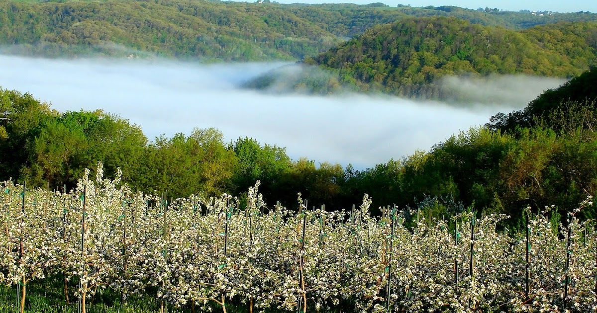 The Fog Stream