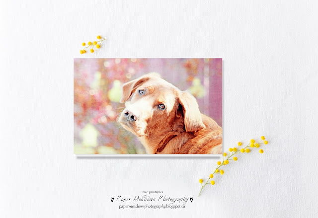 Paper Meadows Photography Blog-Free printable dog greeting card.
