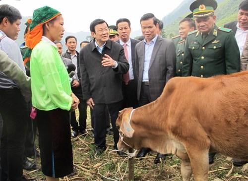 24.000 con bò giống giúp hộ dân nghèo biên giới