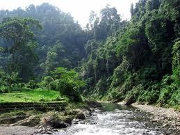 CoolAsianTravel: Forest Of Bukit Barisan Selatan National Park