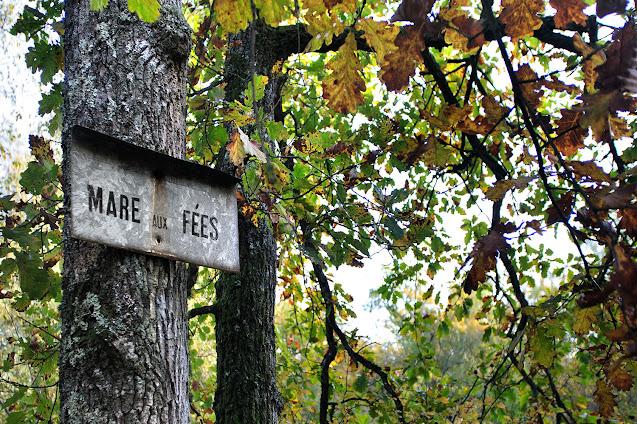 La Mare aux Fées, Forêt de Fontainebleau.