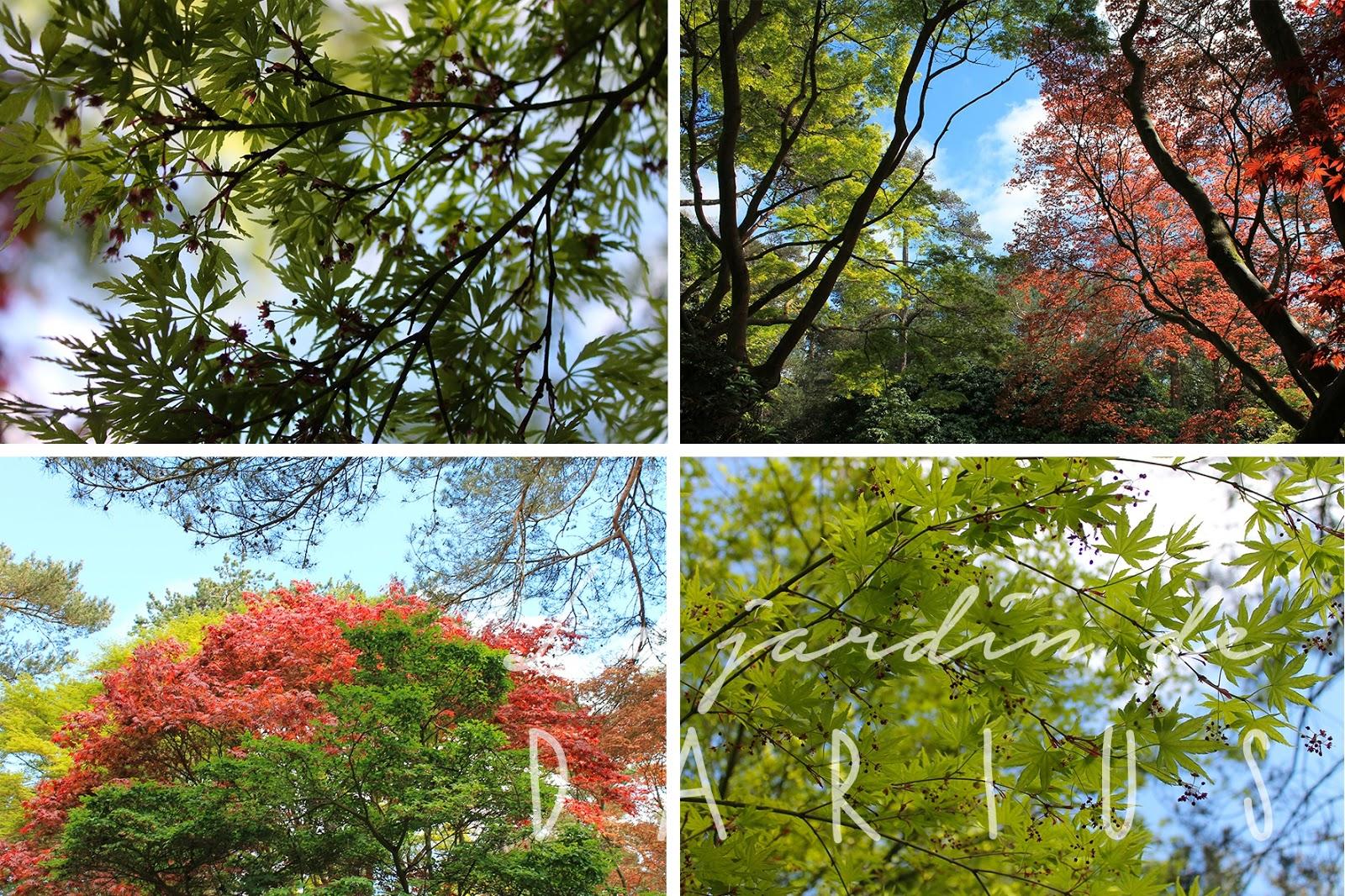 Le jardin de darius bois des moutiers 1 2 - Le jardin d erables ...