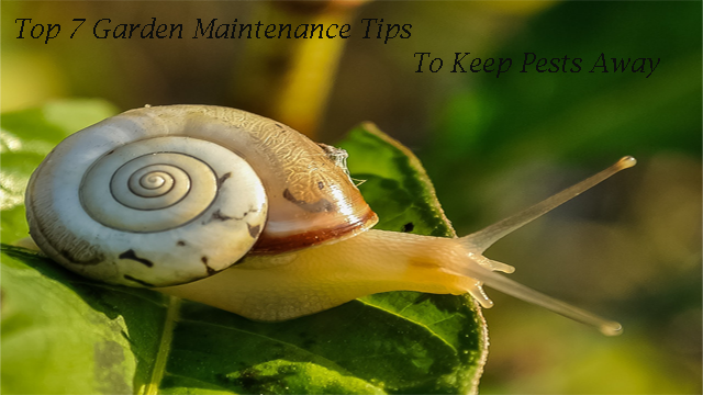 Top 7 Garden Maintenance Tips To Keep Pests Away