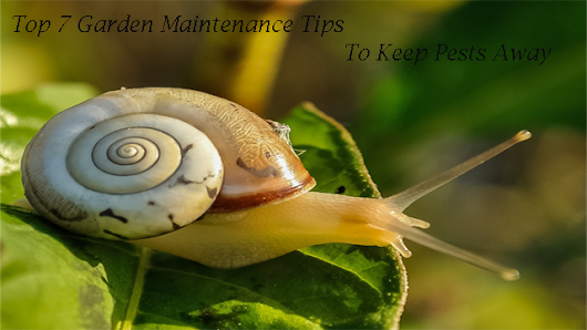 Top 7 Garden Maintenance Tips To Keep Pests Away - Floriculture Care - House Plants