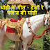 Ghodi Ke Geet - Dekho Re Panjab Ki Ghodi - घोड़ी के गीत- देखो रे पंजाब की घोड़ी