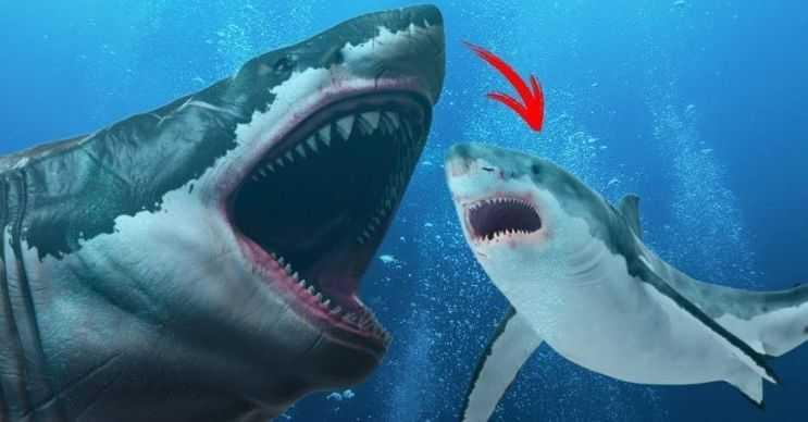 O dönemim en büyük balıklarından biriydi, onun boyuna yetişebilen çok az deniz canlısı vardı.