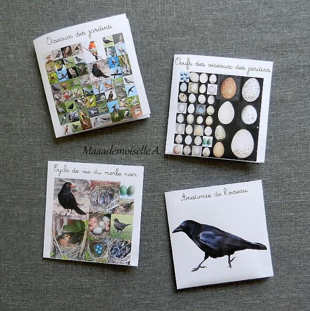 Cartes de nomenclature : Oiseaux des jardins, oeufs, anatomie et cycle de vie