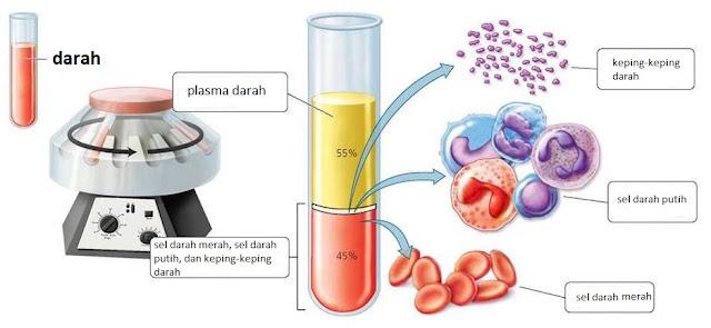 Jaringan darah