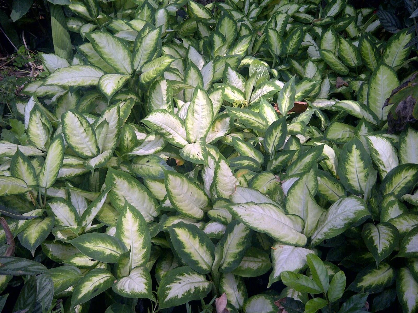 Vivero san andres bondades de las plantas ornamentales for Tres plantas ornamentales