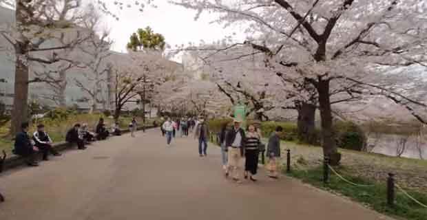 Ada banyak tempat wisata yang dapat kamu lihat dan kunjungi di Jepang 10 Tempat Wisata di Jepang yang Wajib Dikunjungi