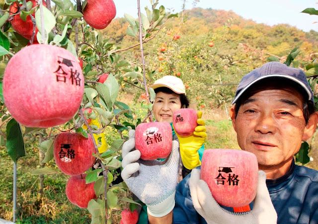 Actividades económicas primarias de Corea del Sur