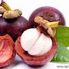 Manfaat Kulit Manggis Untuk kesehatan Tubuh Manusia