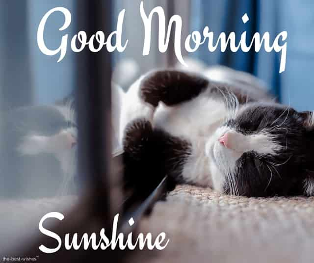 good morning sunshine with a sleeping cat