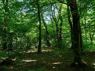 Клевань. Лісові хащі біля тунелю Кохання