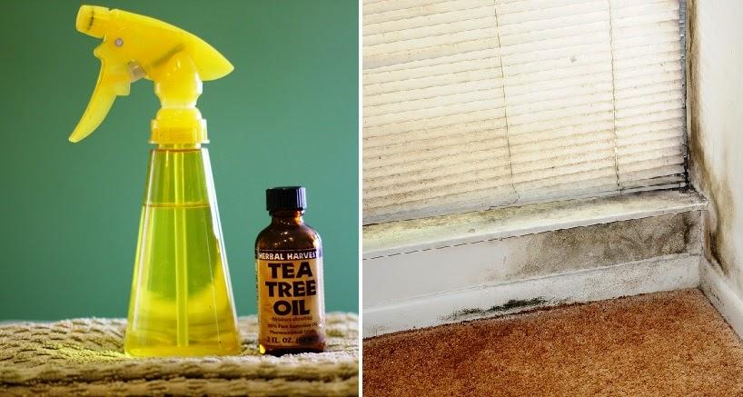 Vive sana 3 maneras naturales de matar el moho en tu hogar - Eliminar hongos ducha ...