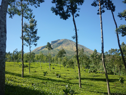 Climbing Mount Sindoro and Sumbing