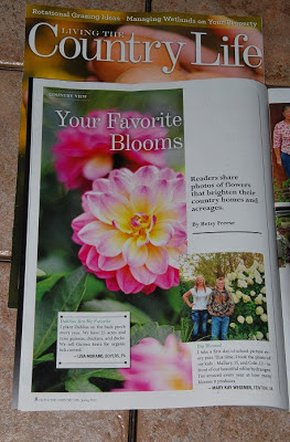 flower picture in magazine