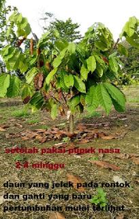 kakao 1 bln penggunkaan nasa 082334020868