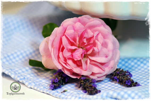 Rosen in der Küche verwenden Rezept Rosentarte - Foodblog Topfgartenwelt
