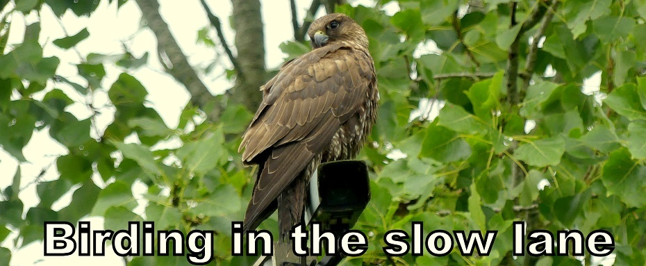 Birding in the slow lane
