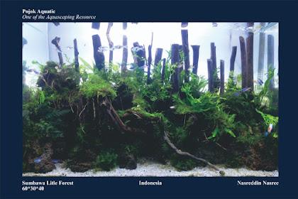 Mengenal Ekosistem Aquascape