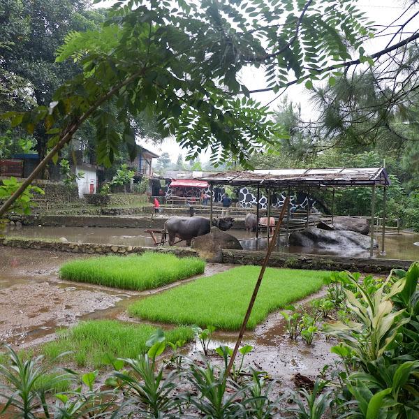 Field Trip : Agro Sawah - Taman Wisata Matahari