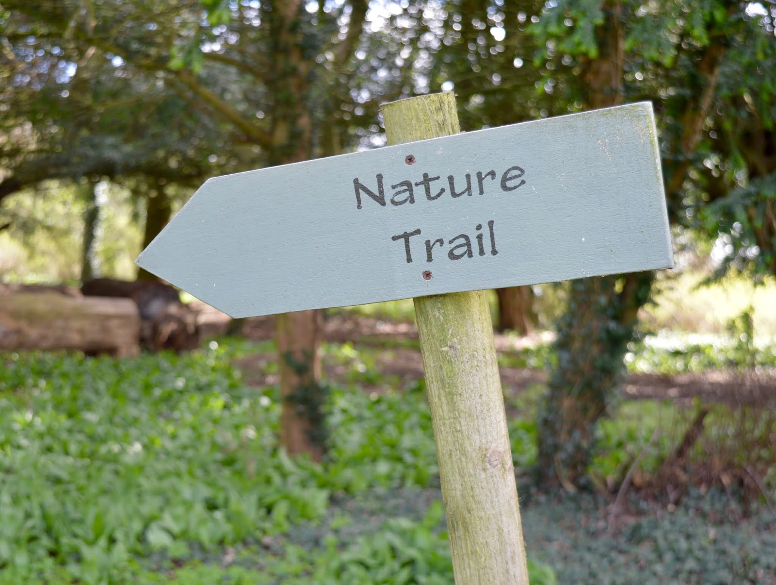 Sunday Lunch, Playgrounds & Birds of Prey at Walworth Castle, Darlington  - nature trail in ancient woodland